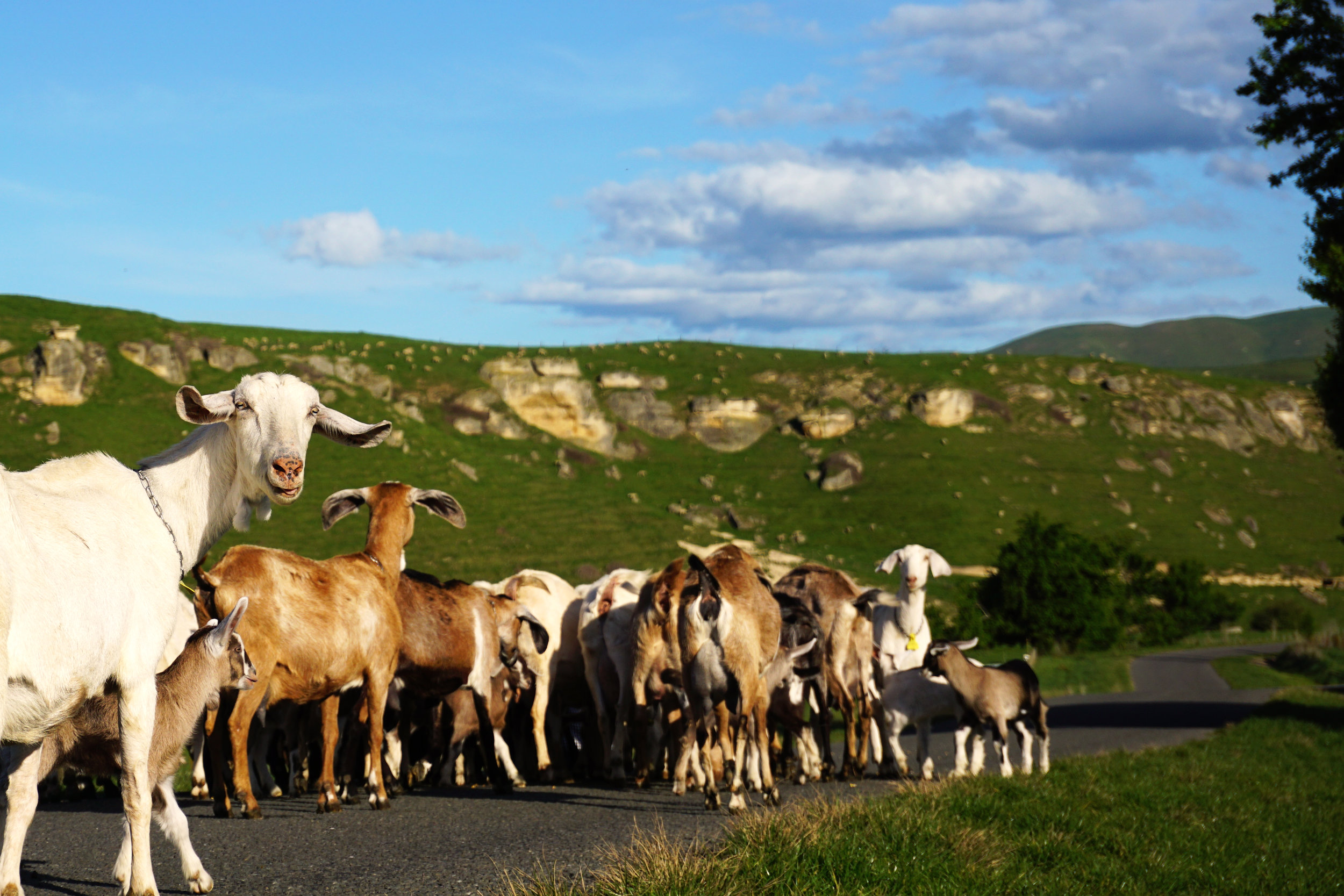 Meet the team - We know our goats by name