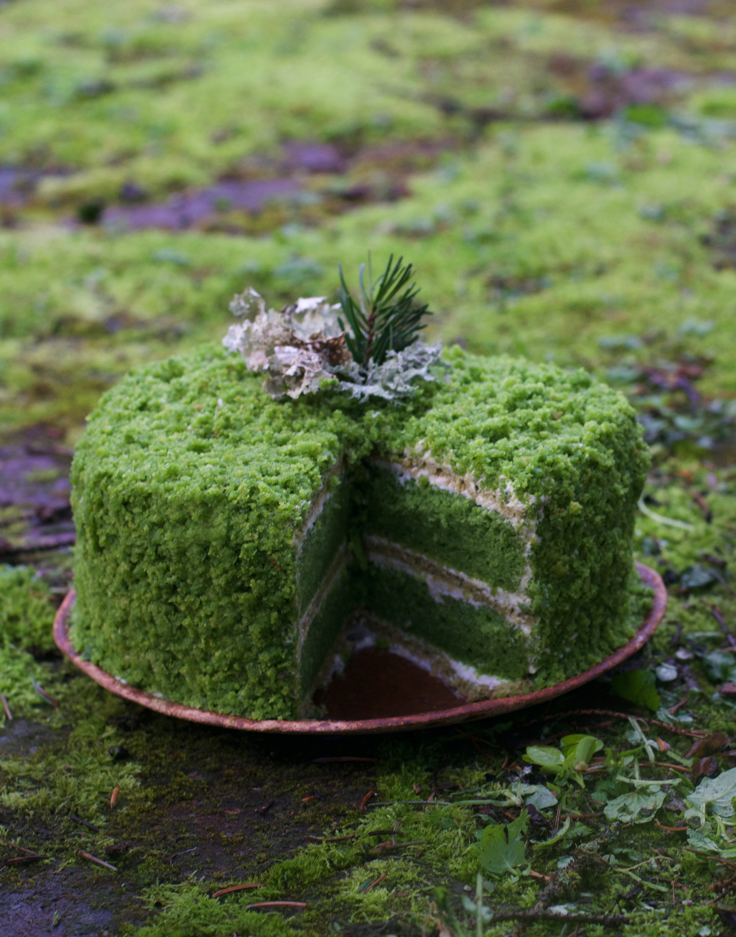 NETTLE CAKE: AN ODE TO MOSS GAZING