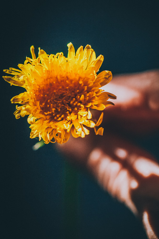 an image of a hand holding a dandelion in a dark room lit by sunlight