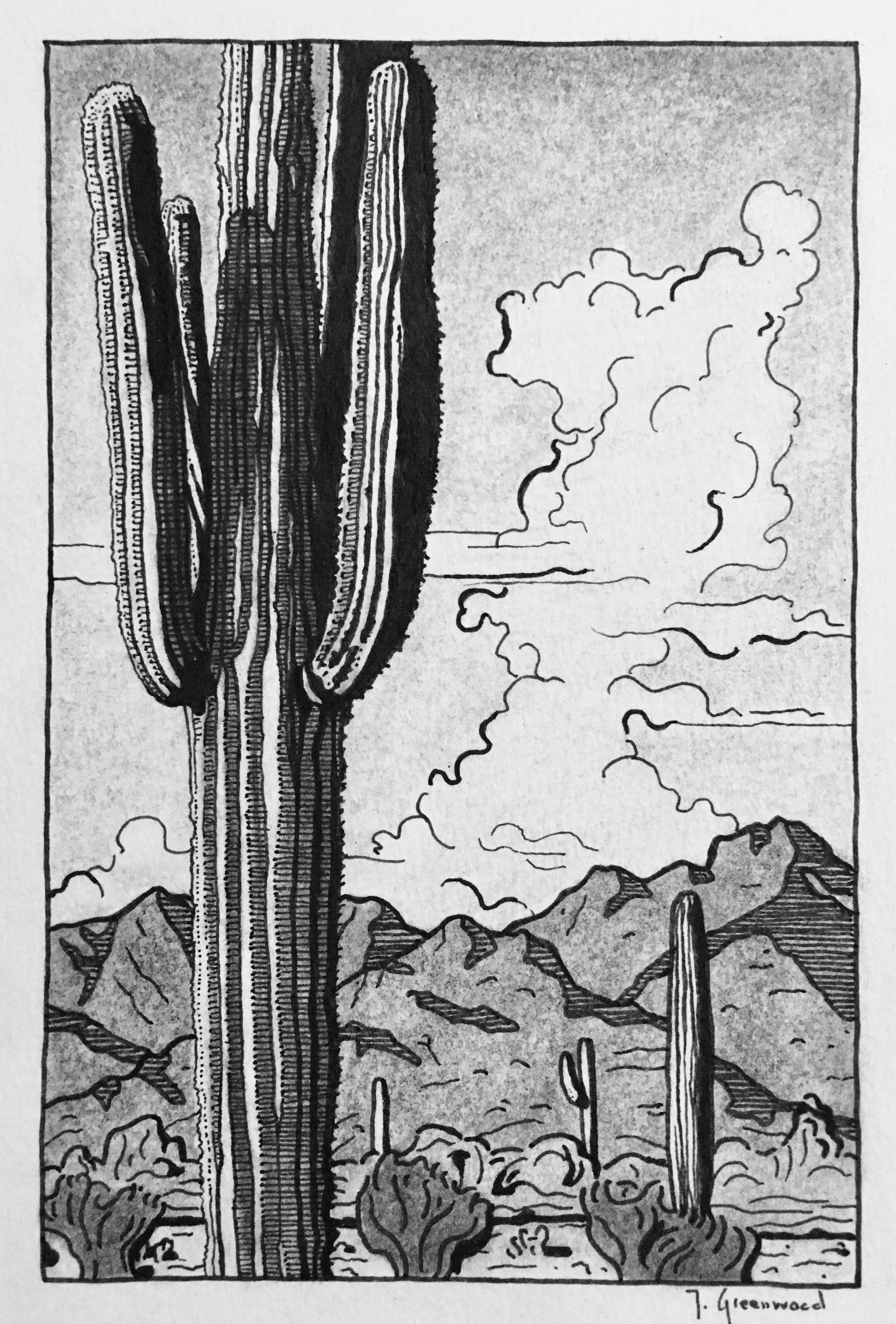 "Avra Saguaro 4x6"" Ink and Charcoal on Paper (Sold)"