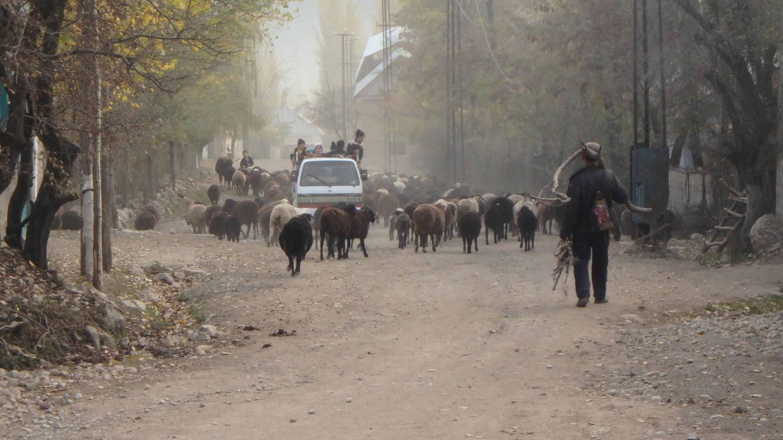 Arslanbob traffic jam.