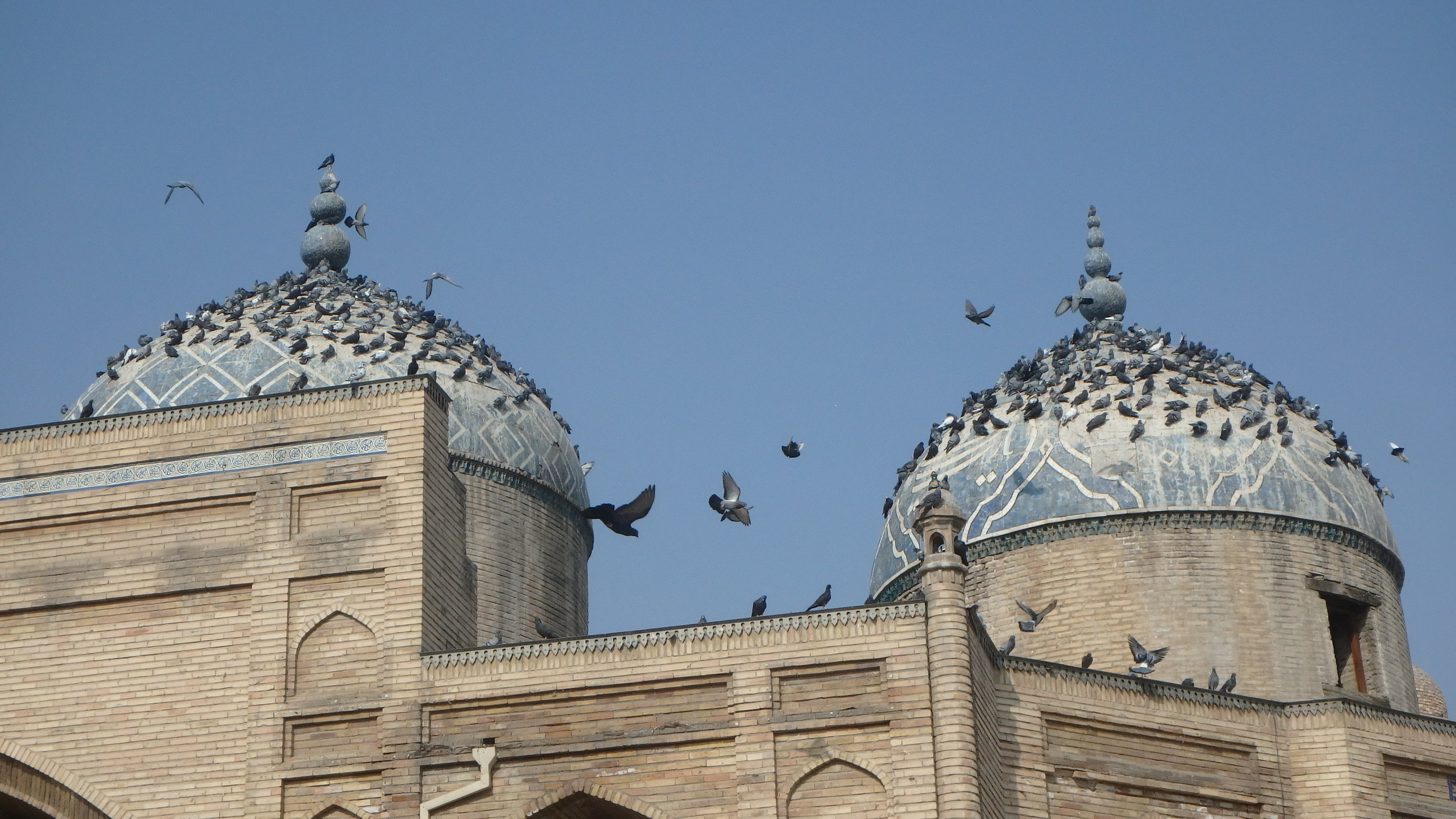 Pigeons paying reverence to the dead, Khujand.