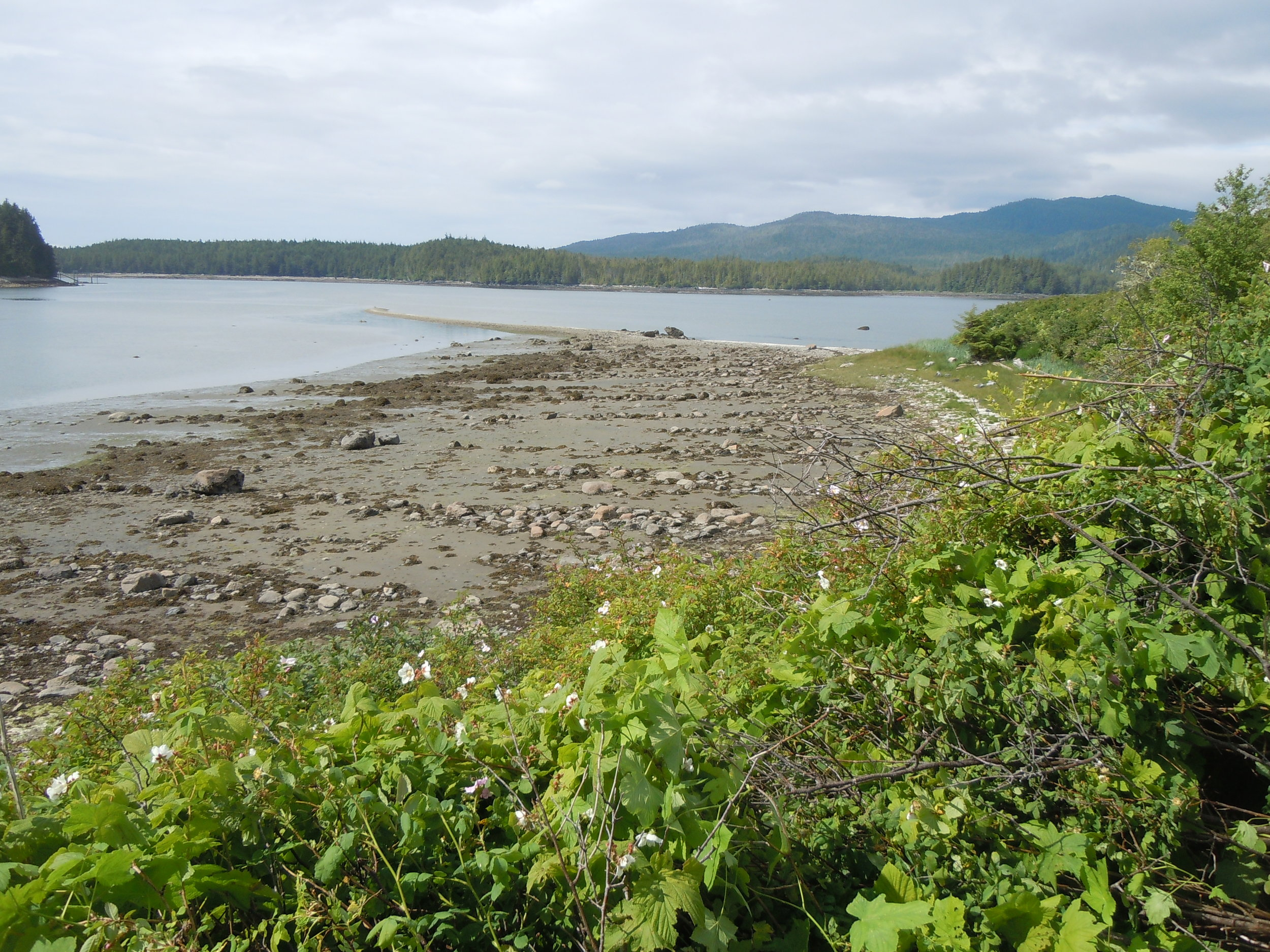Rows of canoe runs formed by clearing lanes within boulders in front of an ancient village on Garden Island, Prince Rupert Harbour. Photo by B. Letham.