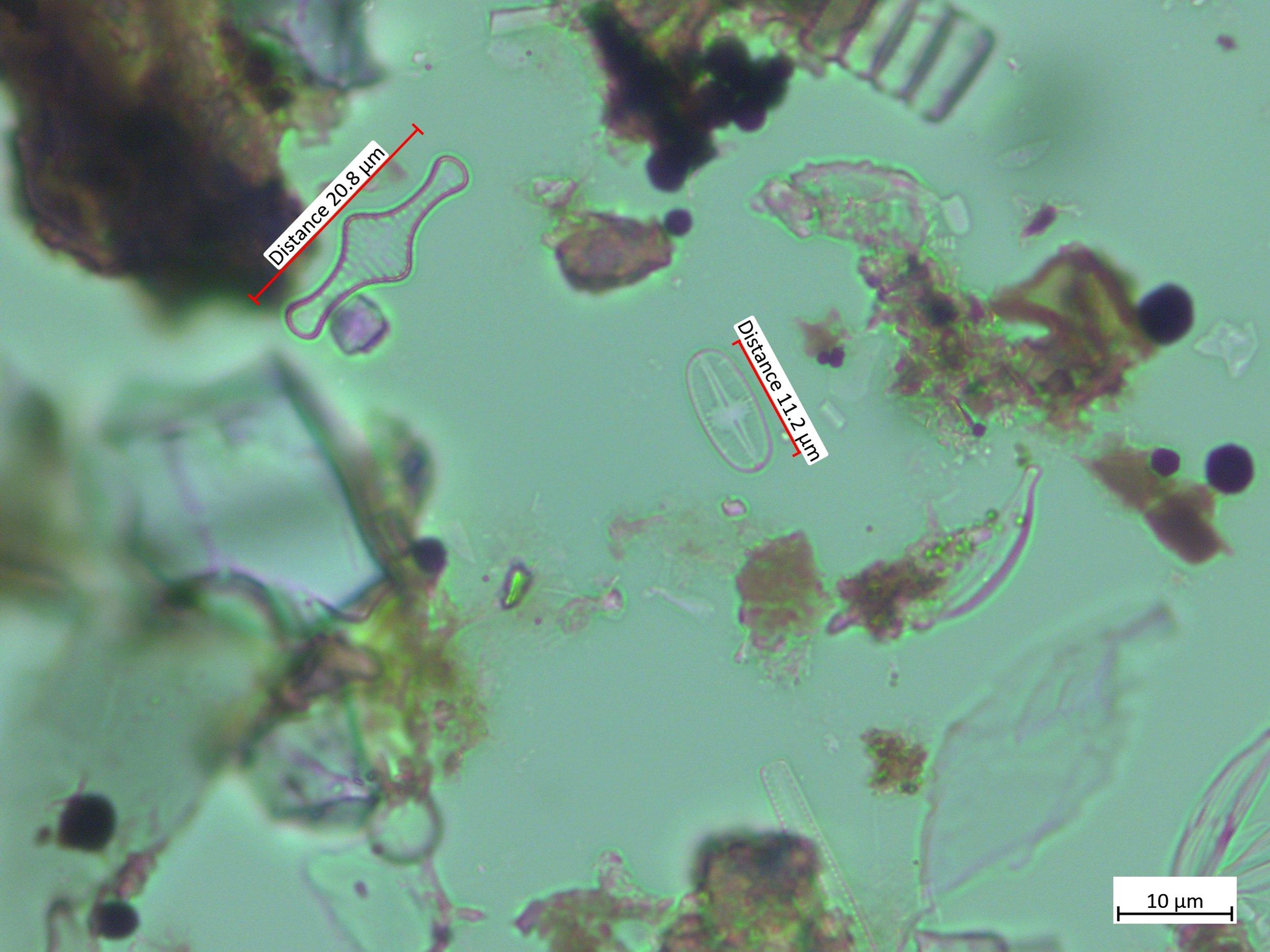 Psammothidium scoticum and Tabellaria flocculosa