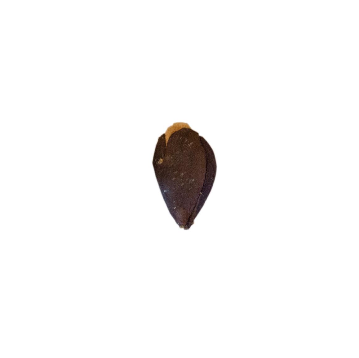 specimens-05.png