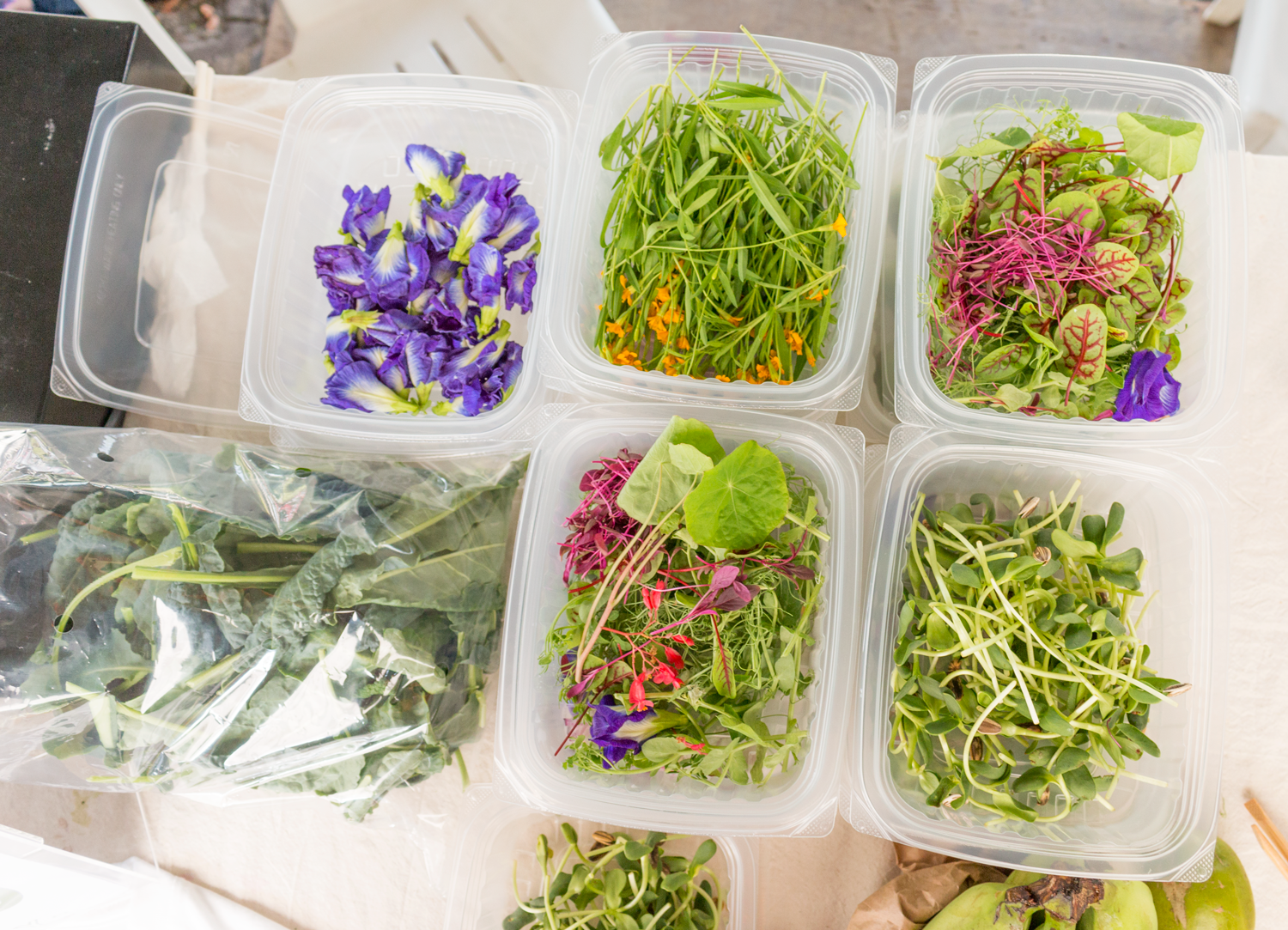 Beautiful edible flowers and microgreens by Edible Garden City