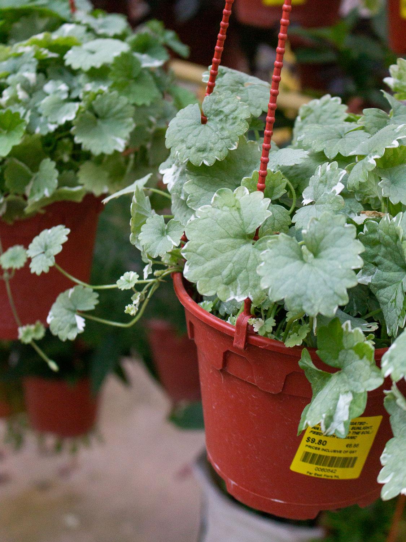 close-up-of-a-plant.jpg