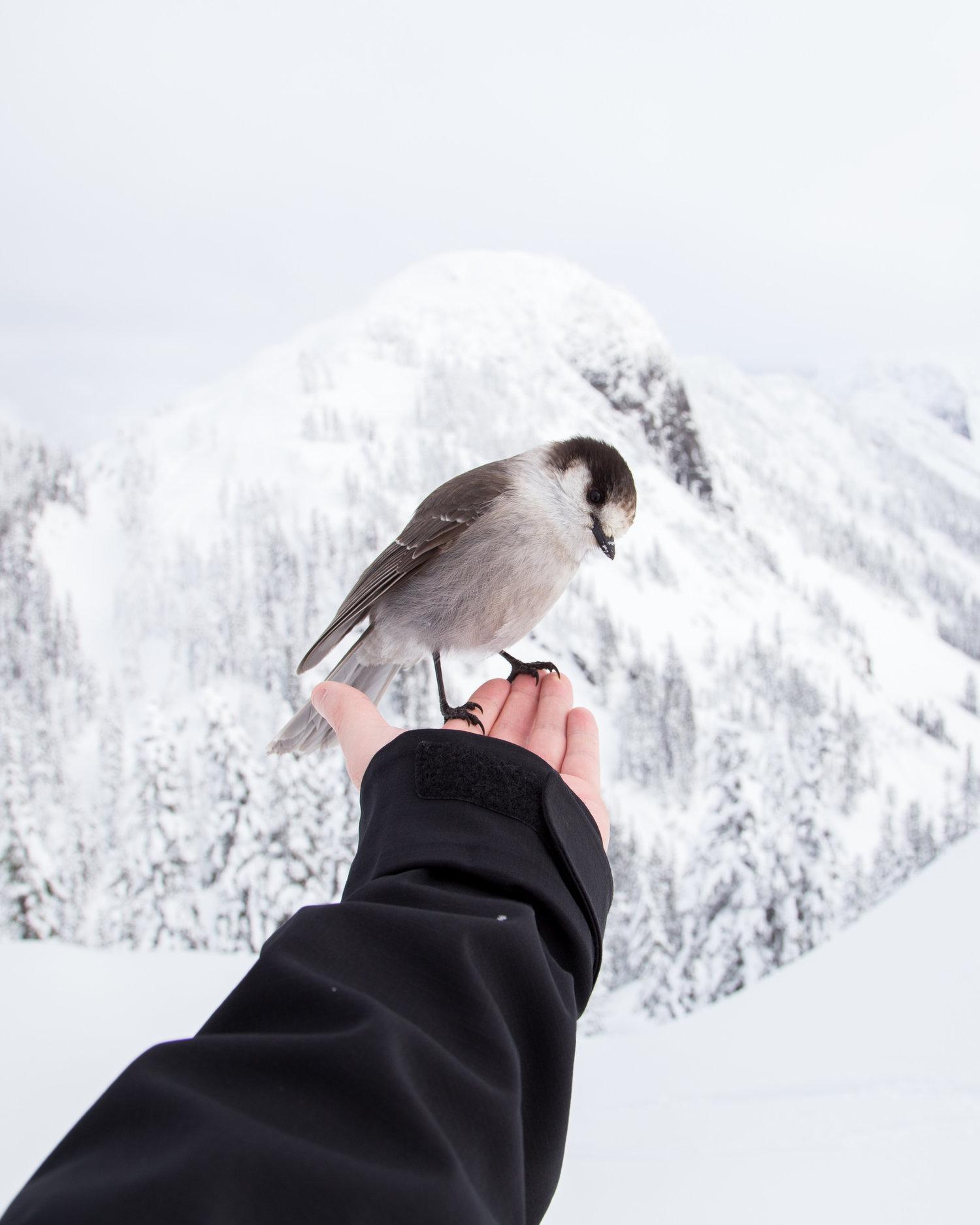 bird animal ethics.jpeg