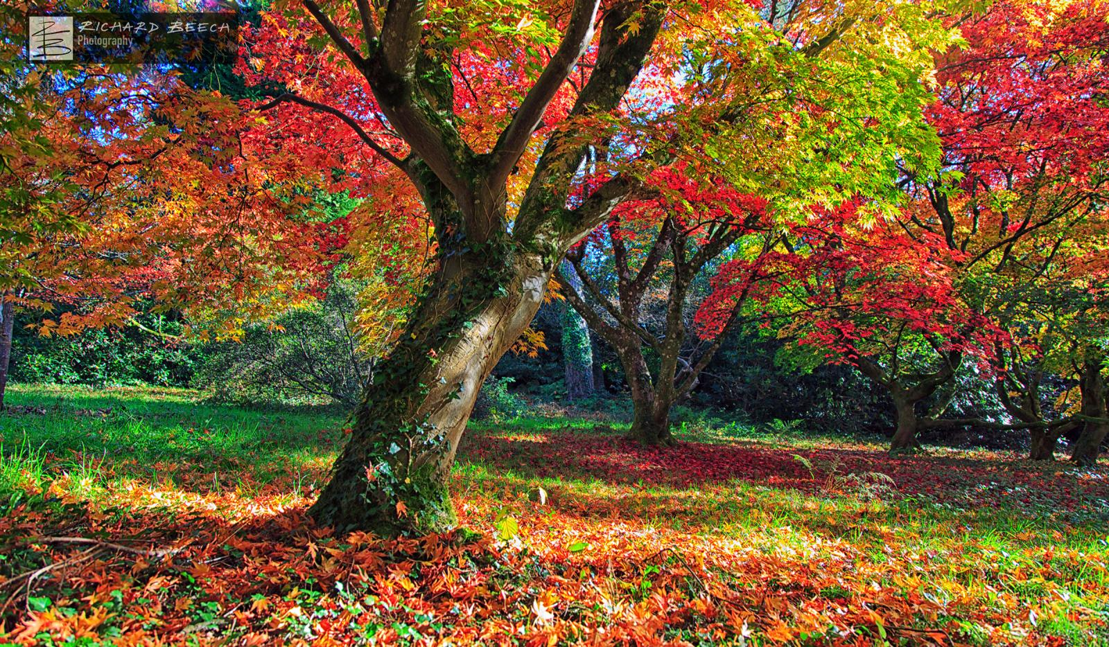 Minterne Autumn Colours