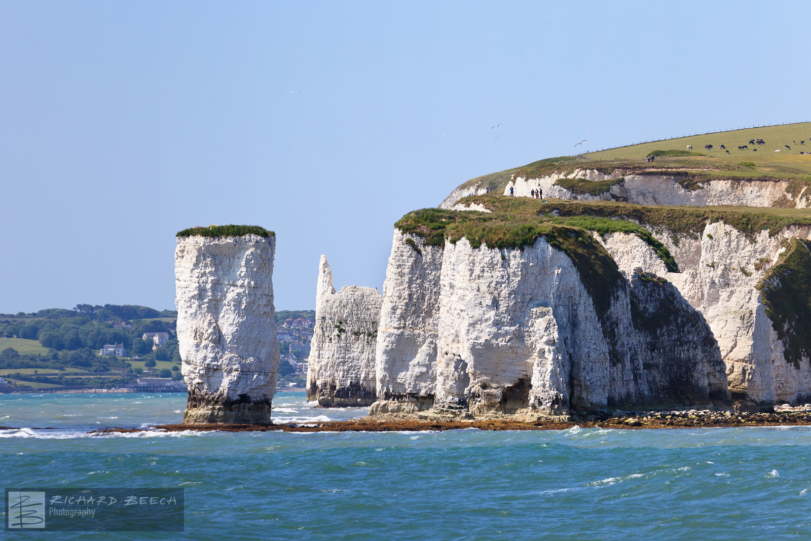Old Harry from the Sea