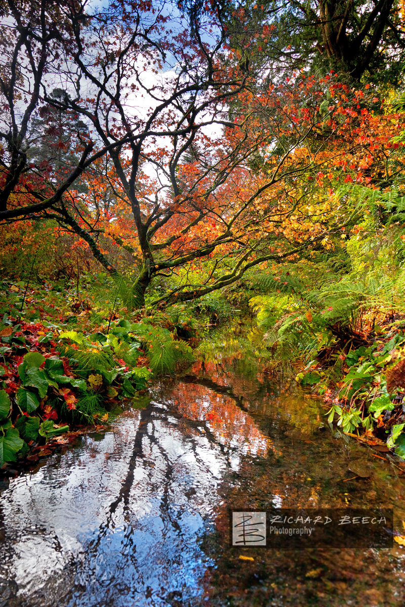 Autumn Reflections at Minterne