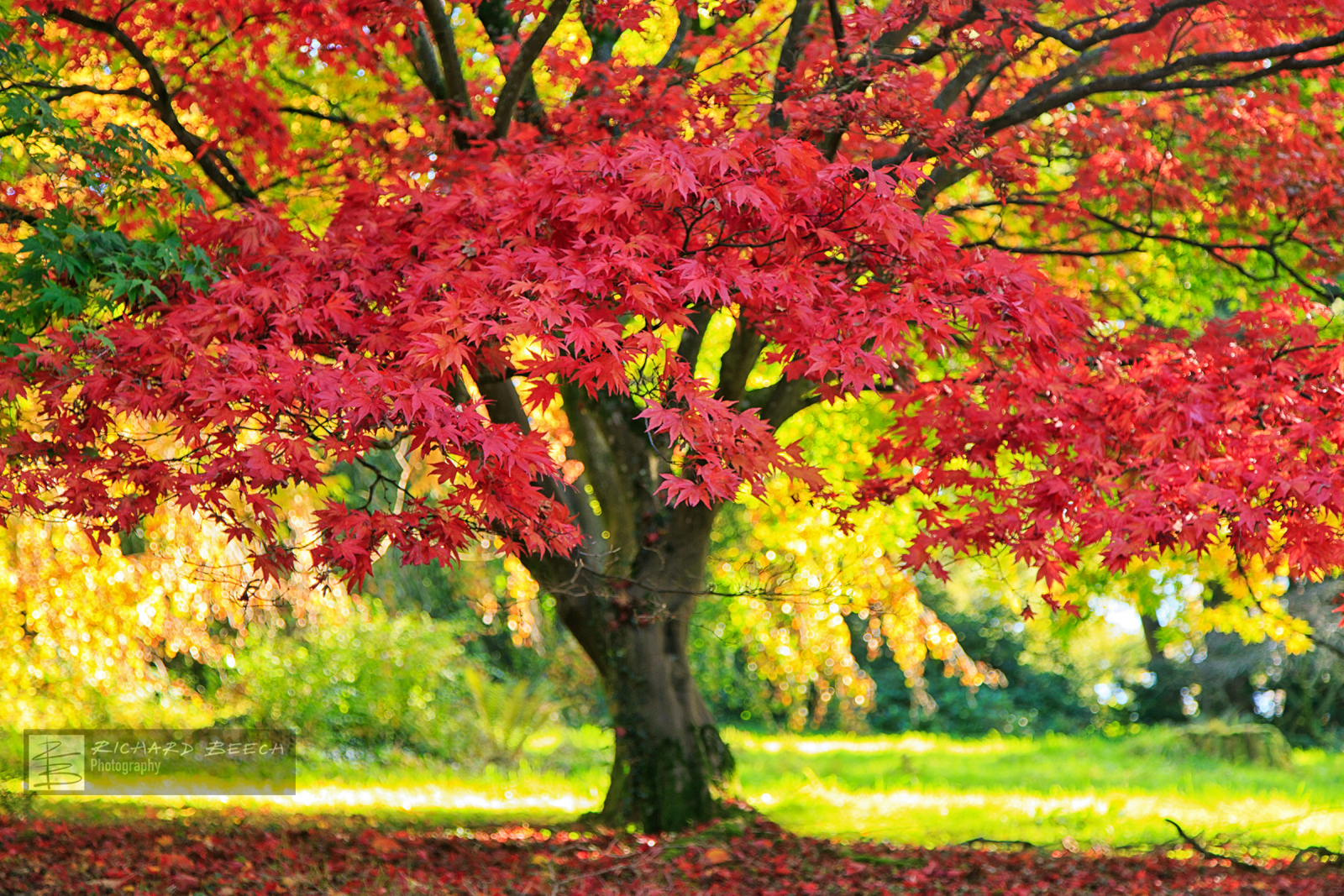 Under the Red Tree, Minterne
