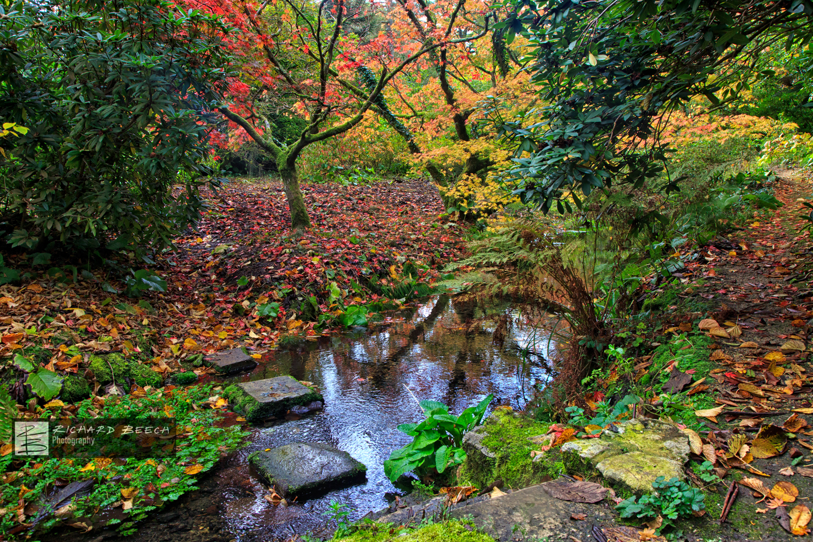 Minterne Autumn Stepping Stones