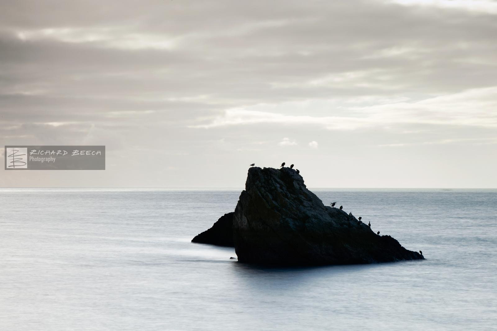 cormorantrockoct1511600.jpg
