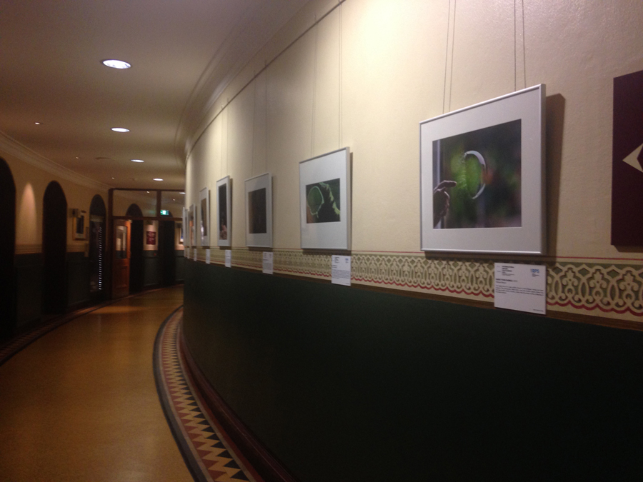 Exhibited in Royal Albert Hall