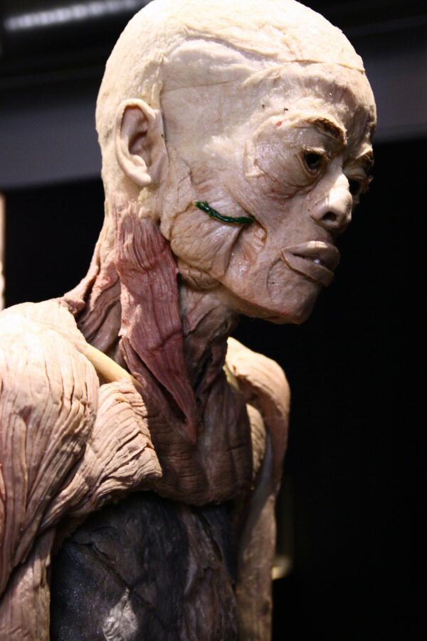 fotos-madrid-exposicion-human-bodies-0011.jpg
