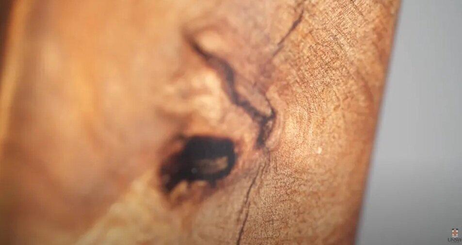 Sección de uno de los árboles Kauri que estudian en Australia.  Captura de pantalla: Universidad de Nueva Gales del Sur / YouTube