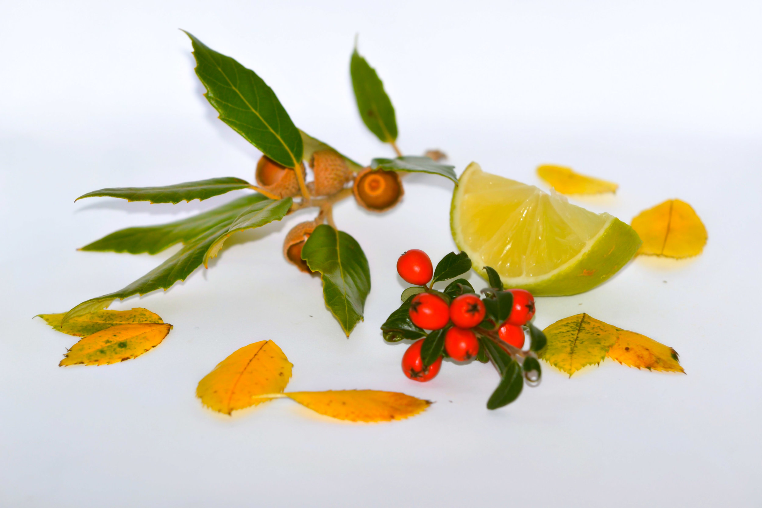 - Our focus will be mainly on the usage of essential oils in skincare, haircare and spa products as well as inhalers
