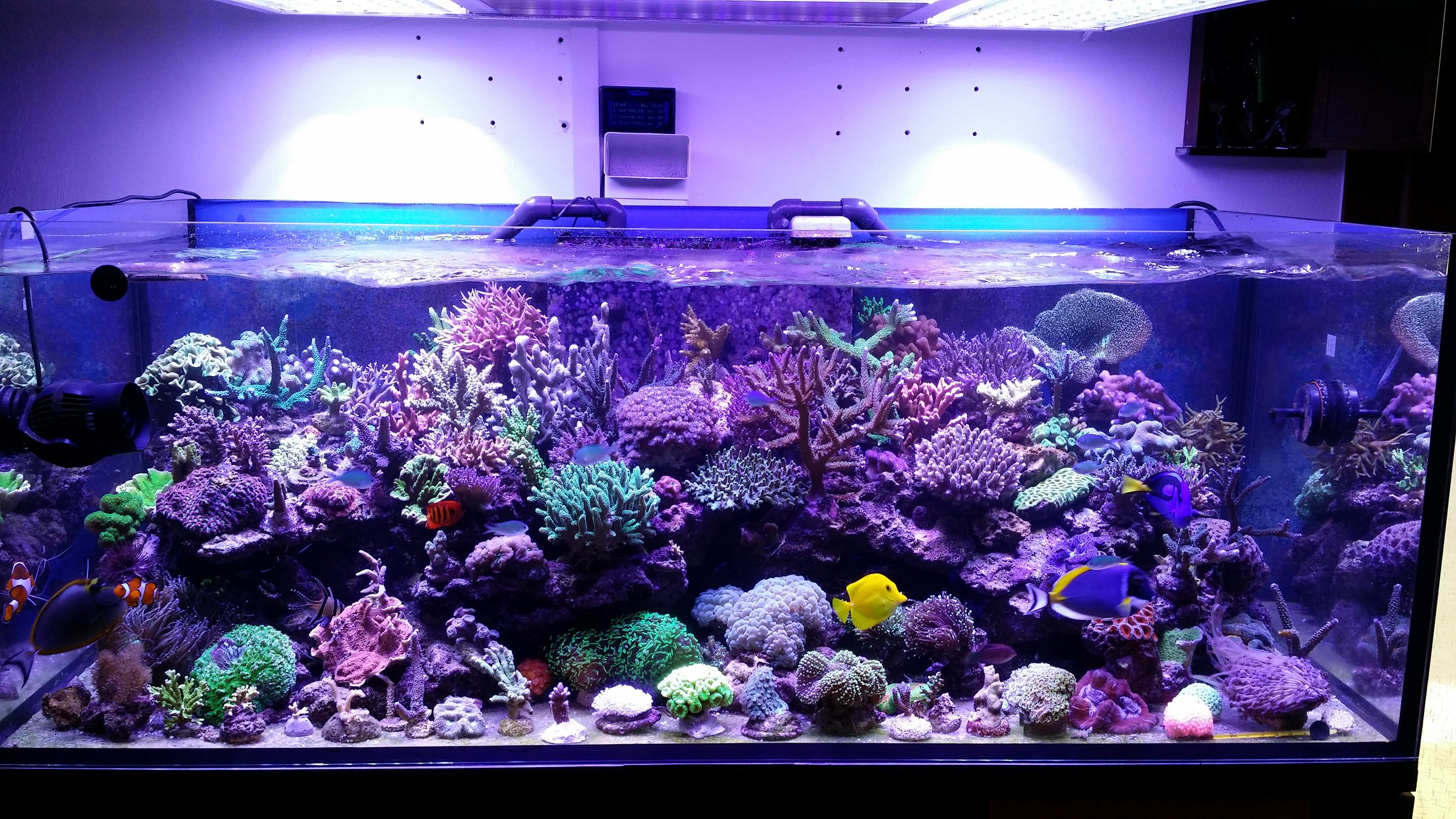 LED-Aquarium-Lighting-Orphek-Atlantik.jpg