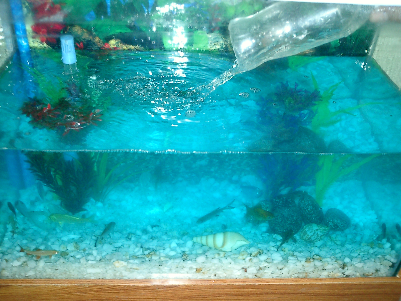 freshwater-aquarium-gravel-filter-setup-1-18.jpg