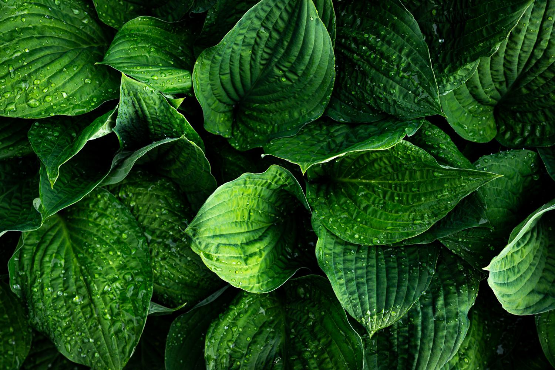 Greenleaves3.jpg