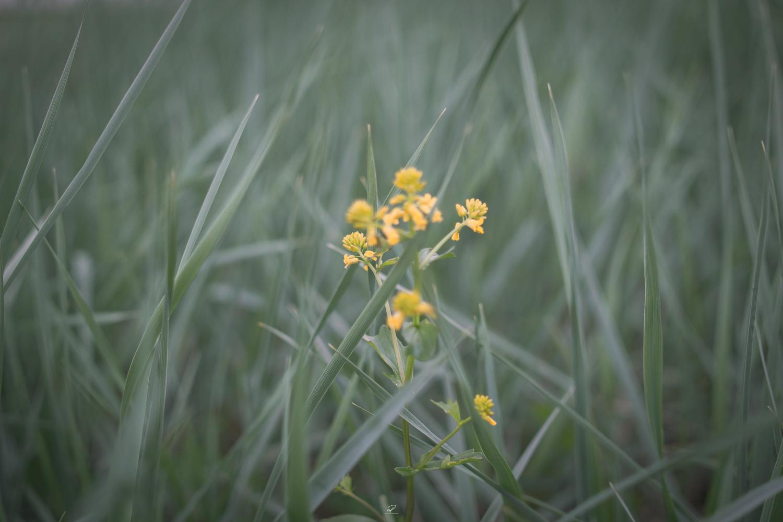 Yellowflowerwide.jpg