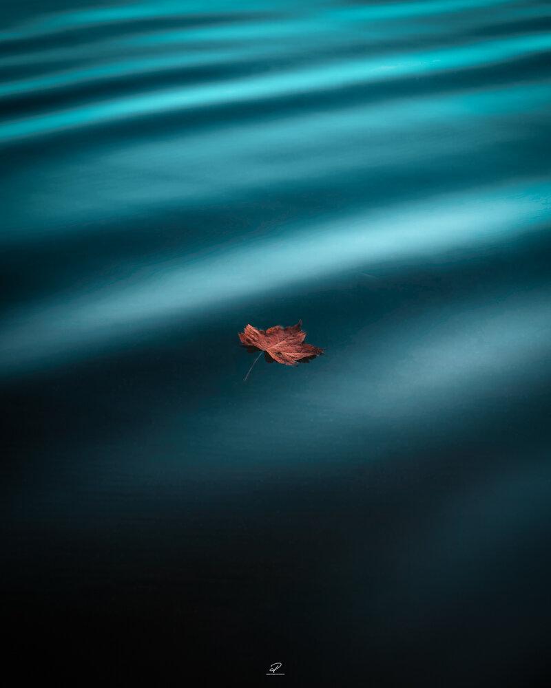Floatingleaf.jpg
