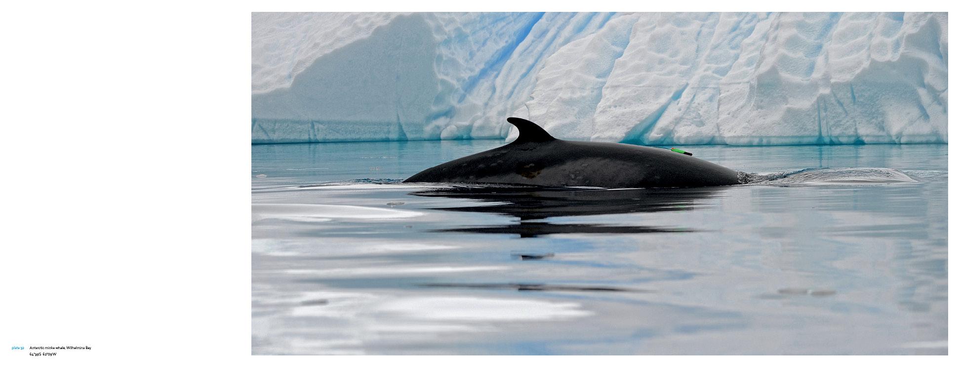 Antarctica_v13_9.jpg