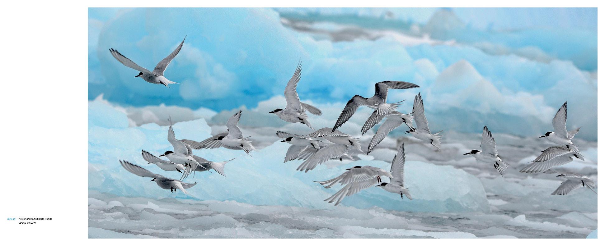 Antarctica_v13_11.jpg