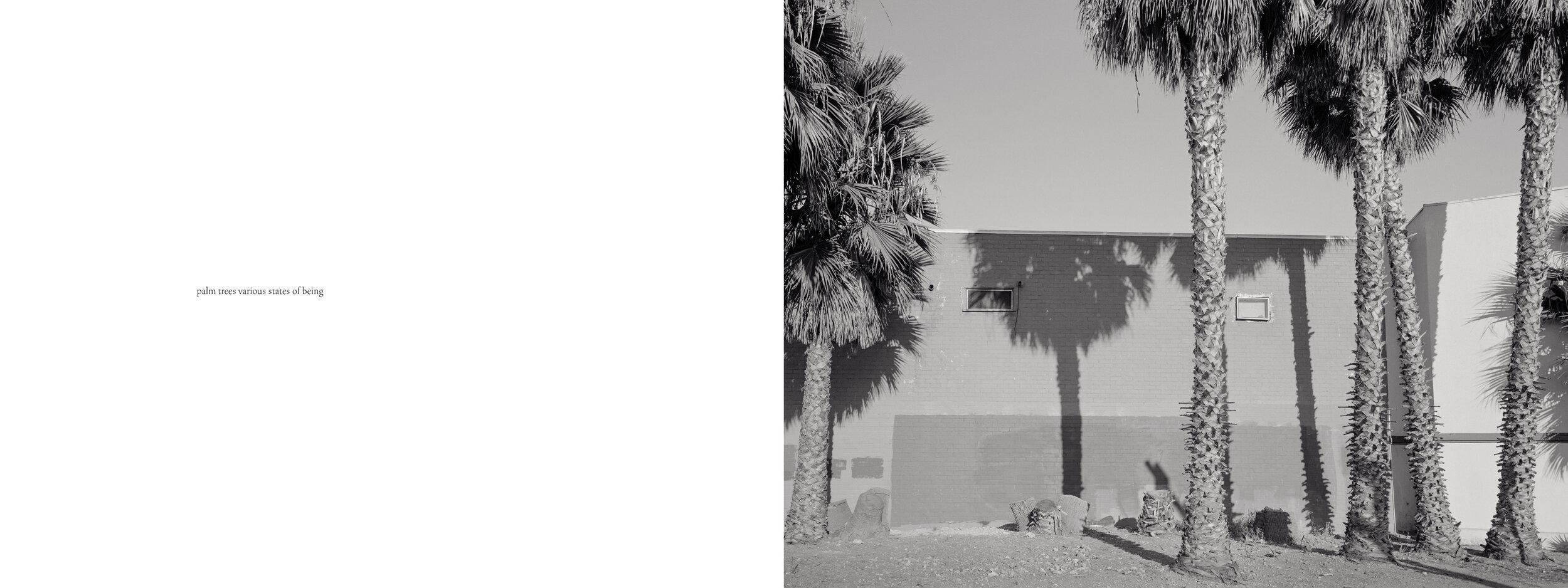 Peterson_Los_Angeles_7.jpg