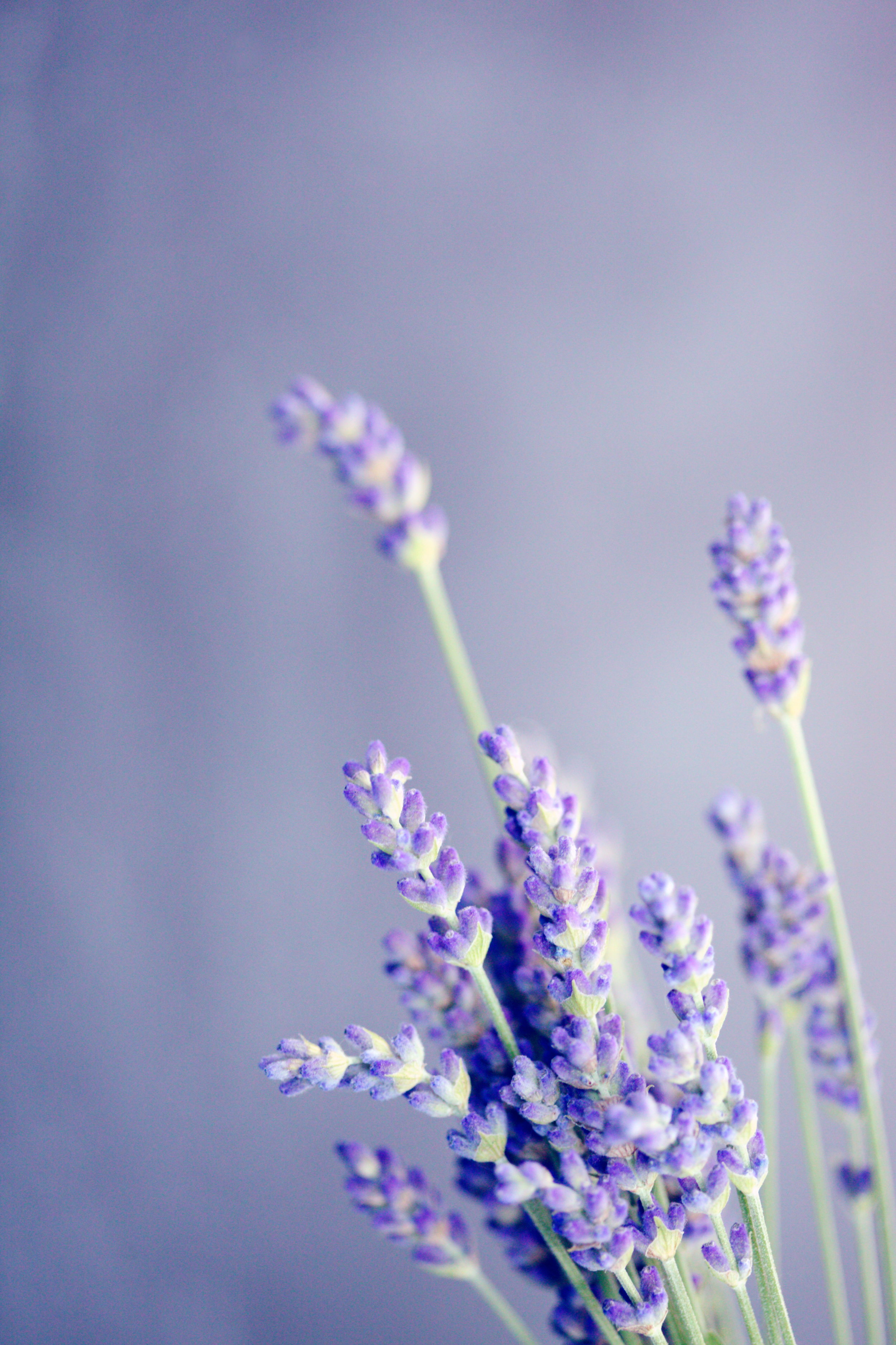 We chose: - ~ organic lavender essential oil for its soothing, healing properties, its ability to balance sebum production and repair damaged skin. The fresh scent has a relaxing and calming effect.~ calendula oil for its regenerative and ant-inflammatory properties. It helps to soften and soothe dry, chapped skin~ chamomile floral water for its calming effect, helping to ease inflamed skin and it has a sweet, warm aroma.~ organic apricot kernel oil because of its high content of oleic and linoleic acid, the phytosterols offering ant-inflammatory and barrier repair support, offering a velvety texture and clarity to the skin.~ organic sunflower oil for its ability to draw out dirt and impurities from the skin. Rich in vitamin E, omega 3 and 6 and beta-carotene, helps to neutralize free radicals which can damage the skin and lead to premature aging.~ aloe vera for is soothing and calming.~ vitamin E for its ability to neutralize free radicals.