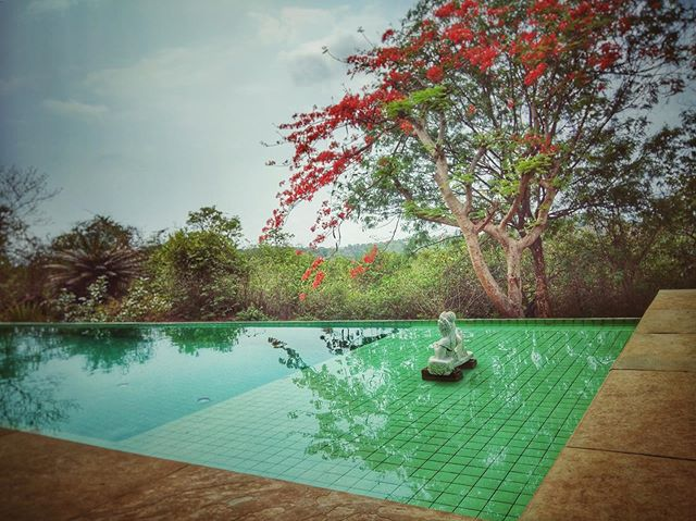 Take the plunge in our pool at #villapanchavatti 🦚 Summer deals on - enquiry now! . . . #goatravel #incredibleindia🇮🇳 #avanilaya #luxuryvilla #luxurypool #goaindia #vacationgoals #travelgoa #villarental #boutiqueresort