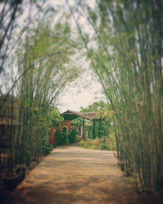 Step into the world of Avanilaya Resort. Boutique villas for a unique getaway. . . . #avanilaya #travelindia #secretescapes #incredibleindia🇮🇳 #goaindia #bamboo #nature_seekers #boutiquevilla #villarental #luxuryvilla