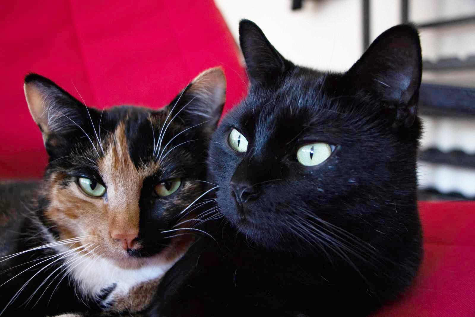 Shadoa (Black) and Tara (Multi Coloured)