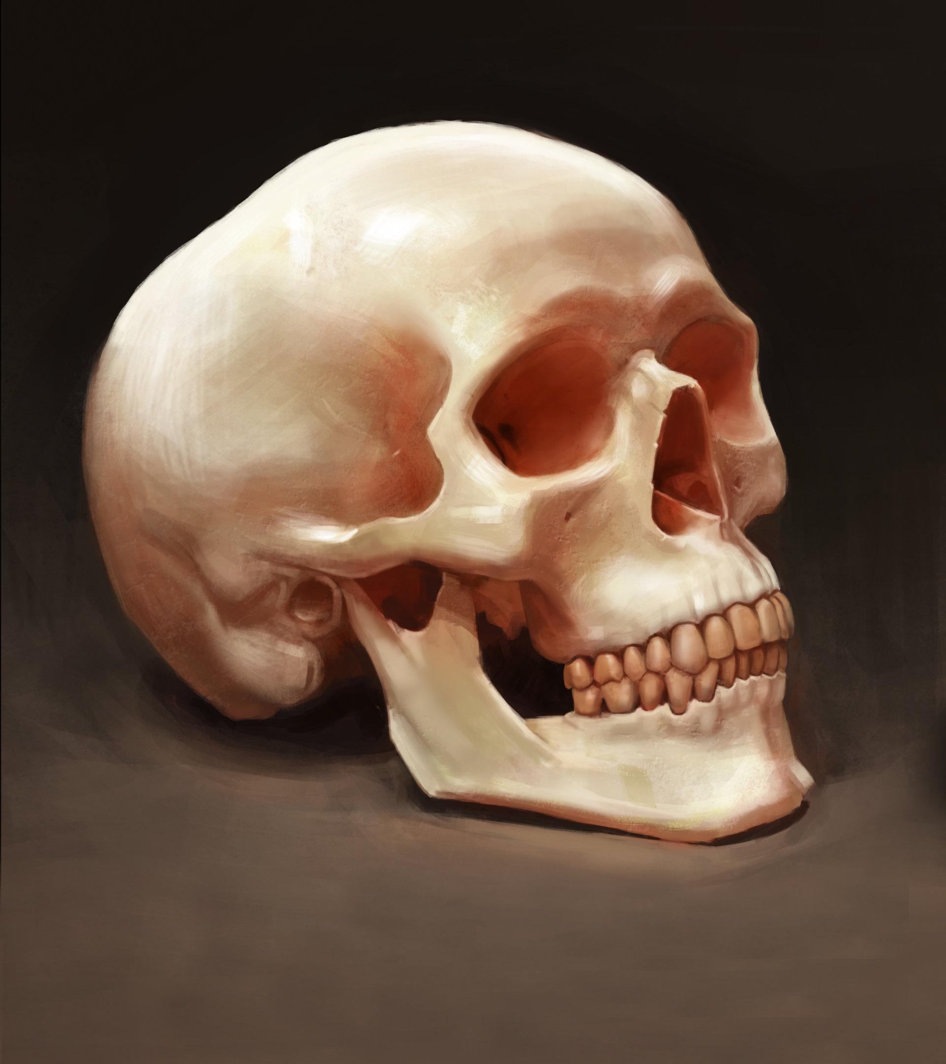 andrew-erickson-andrew-erickson-skull-study.jpg