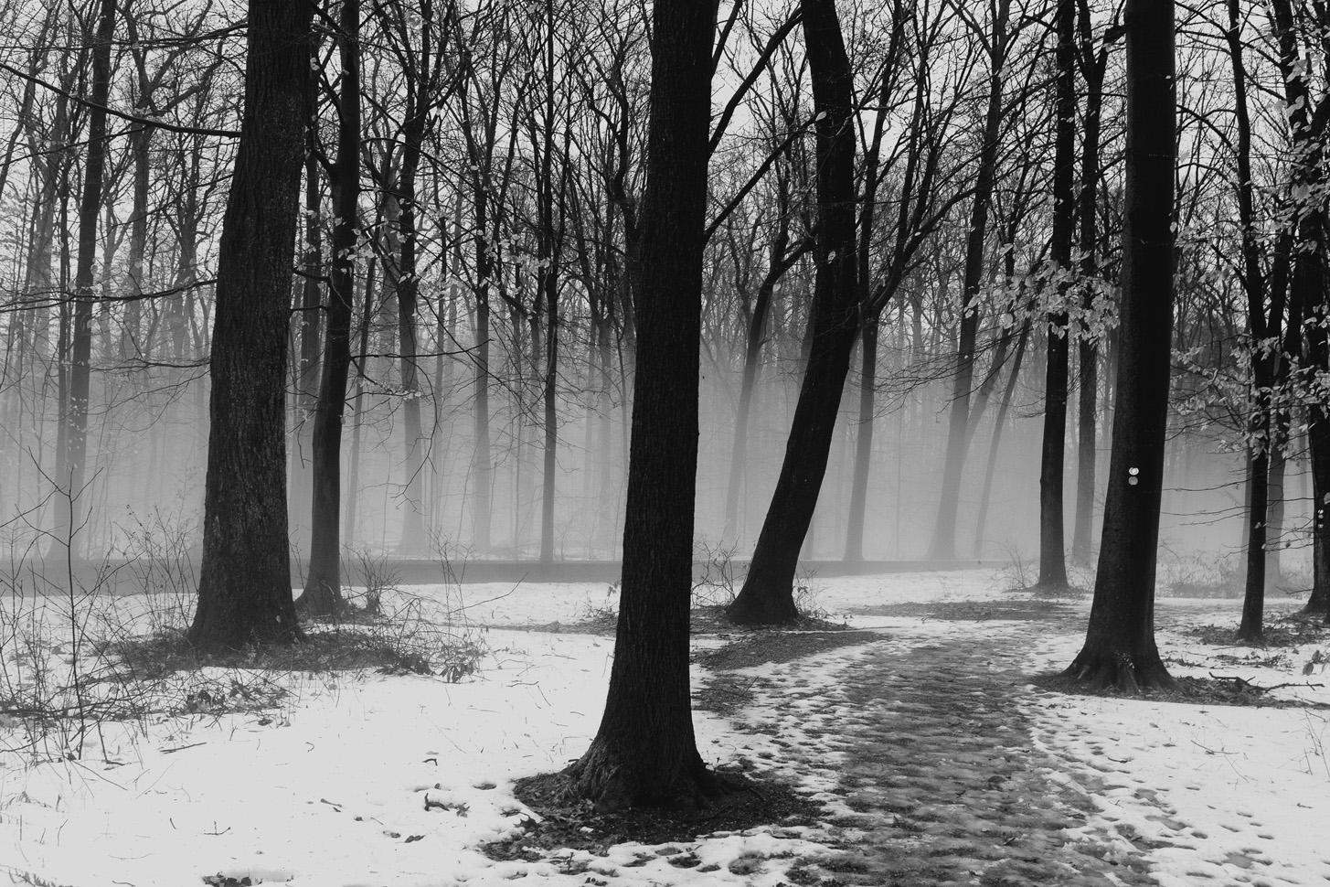 011218-photo-walk-snow-fog-rain-19.jpg