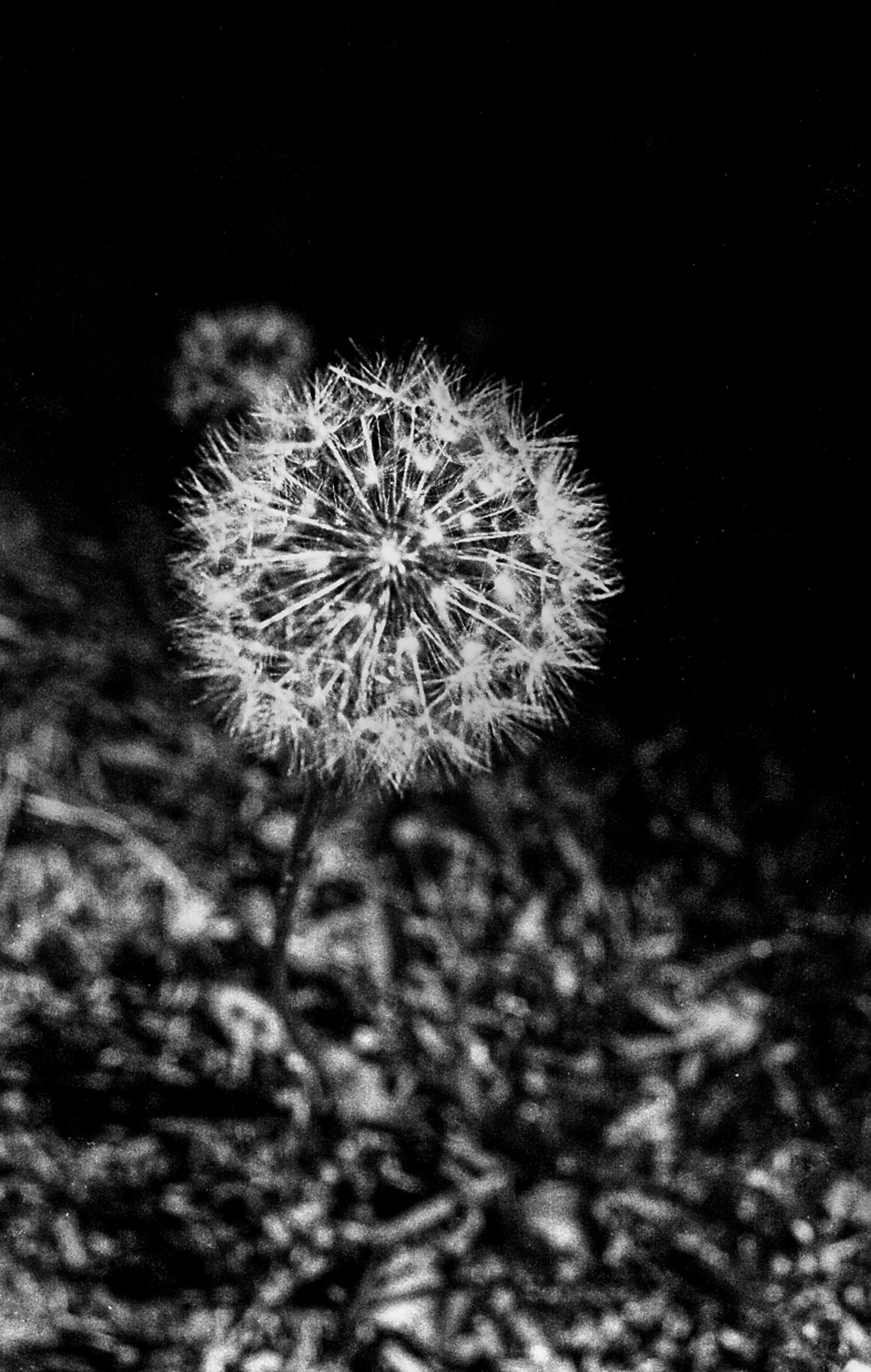 050818-Arista-Edu-400-008-Edit.jpg