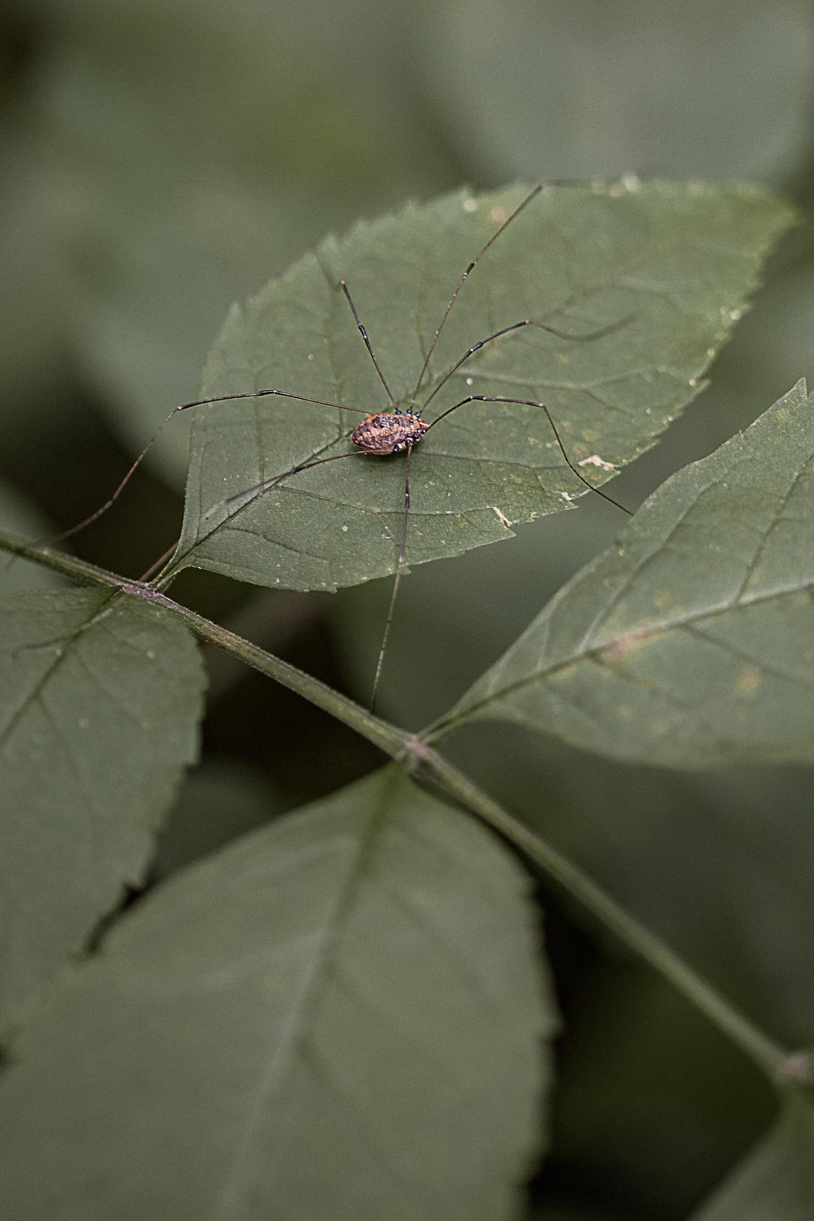 091518-macro-nature-25.jpg