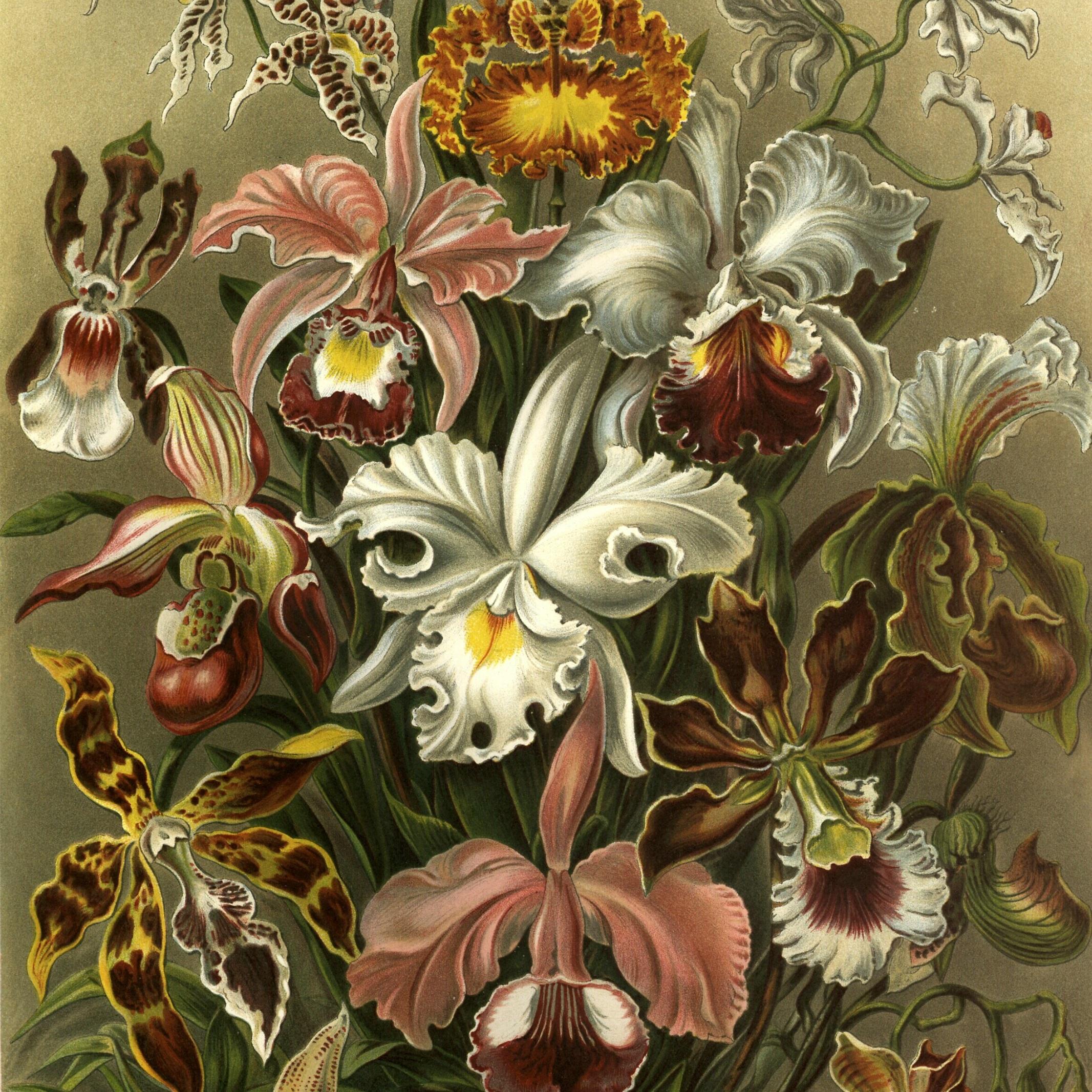 Wild Orchid Meditation -