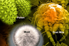 Enviromental Allergies - Dust, mold, pollen, trees, etc.