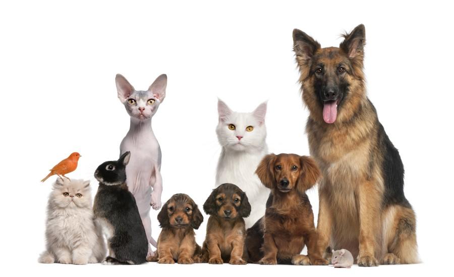 Animal Allergies - Dogs, cats, horses, bunnies, etc.