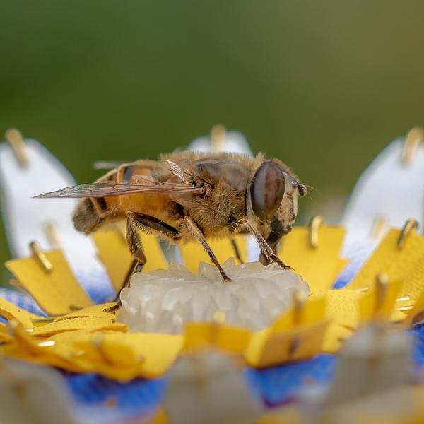 matildeboelhouwer-insectology-food-for-buzz1_photography-janneke-van-der-pol.jpg