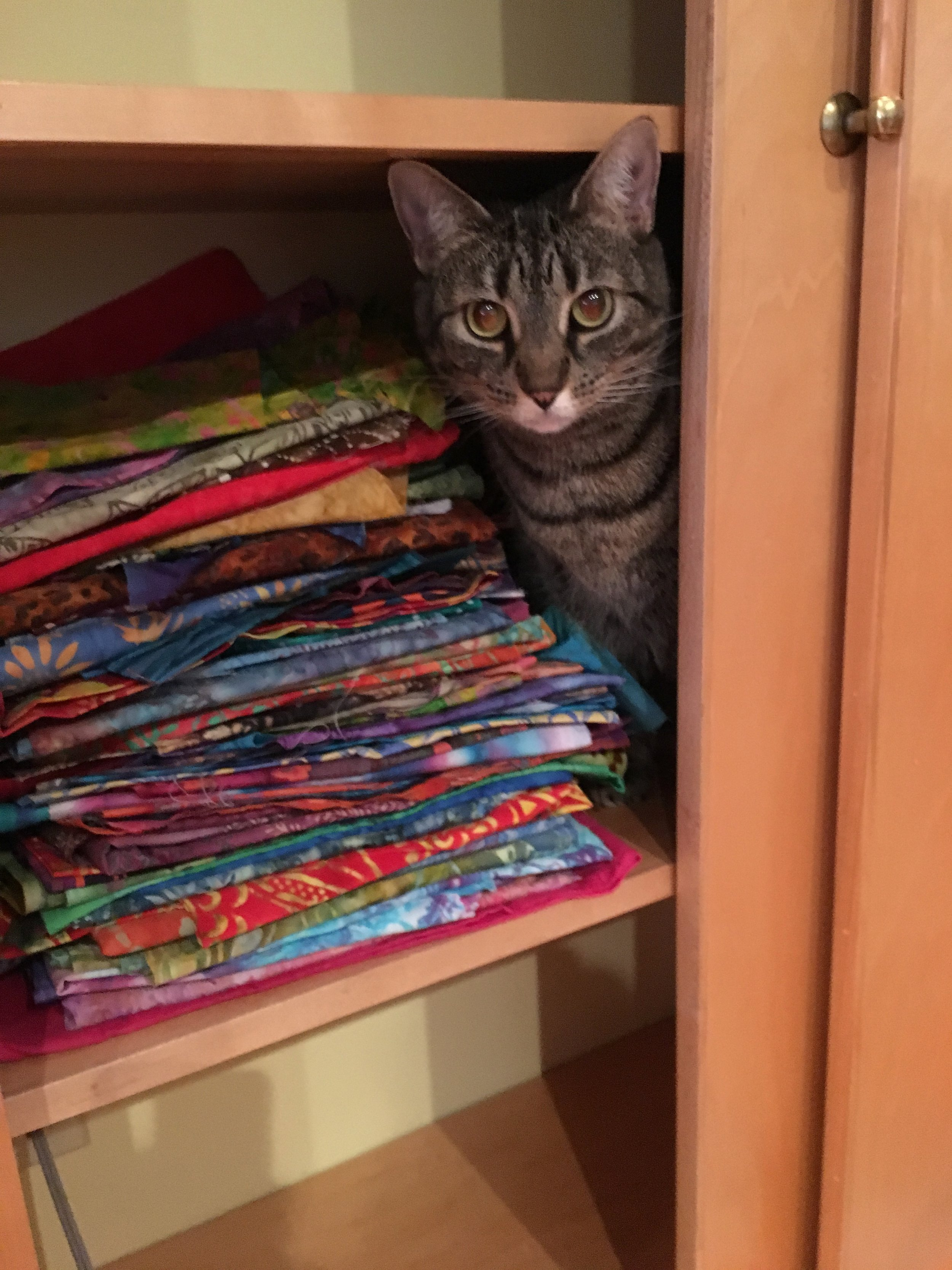 Just an update from the Quilt Built studio. After pulling all of those fabrics out it took me awhile to stack them and re organize. Even Rosie is pleased!