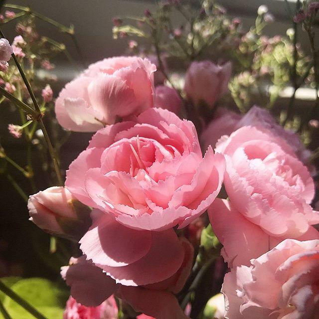 Spring 🌸 #flowerphotograph #springhasarrived #allergyseason #prettypink #naturephotograph