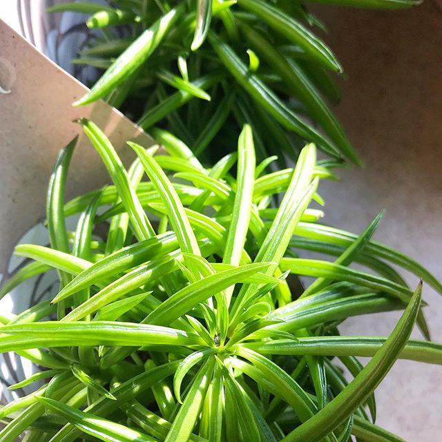 Sun and succulents 🌞🌿 #sunnyskies #succulentslovers #plantphoto #succulentphoto #popofcolor #naturephotogtaphy