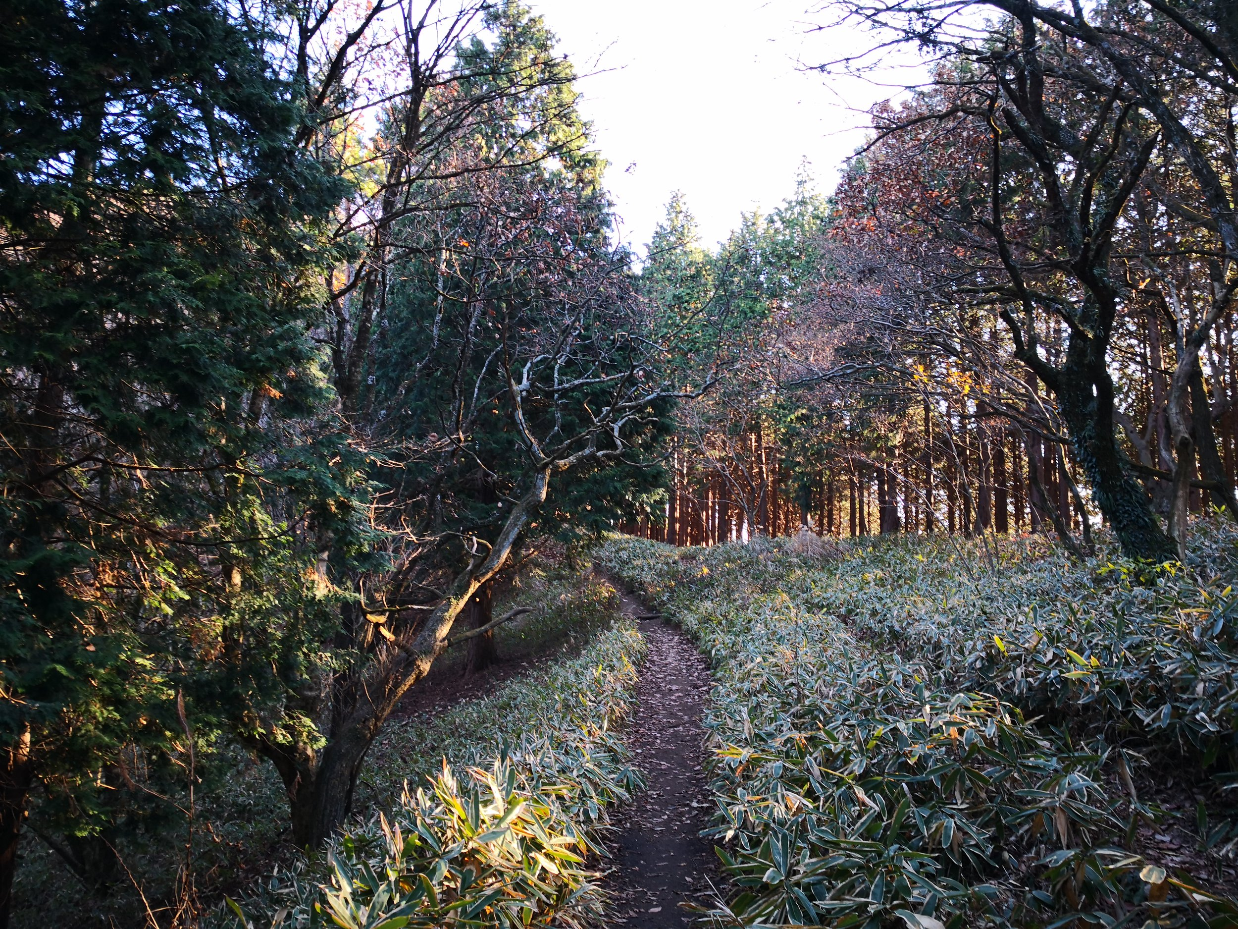 Woodland trail on a chilly December day