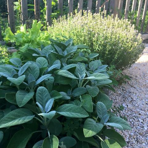 Add fragrant and tasty herbs to your walkways.