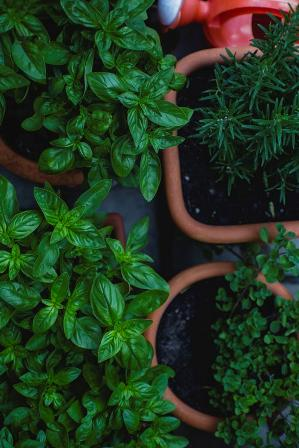 Use potted herbs and veggies for small spaces.