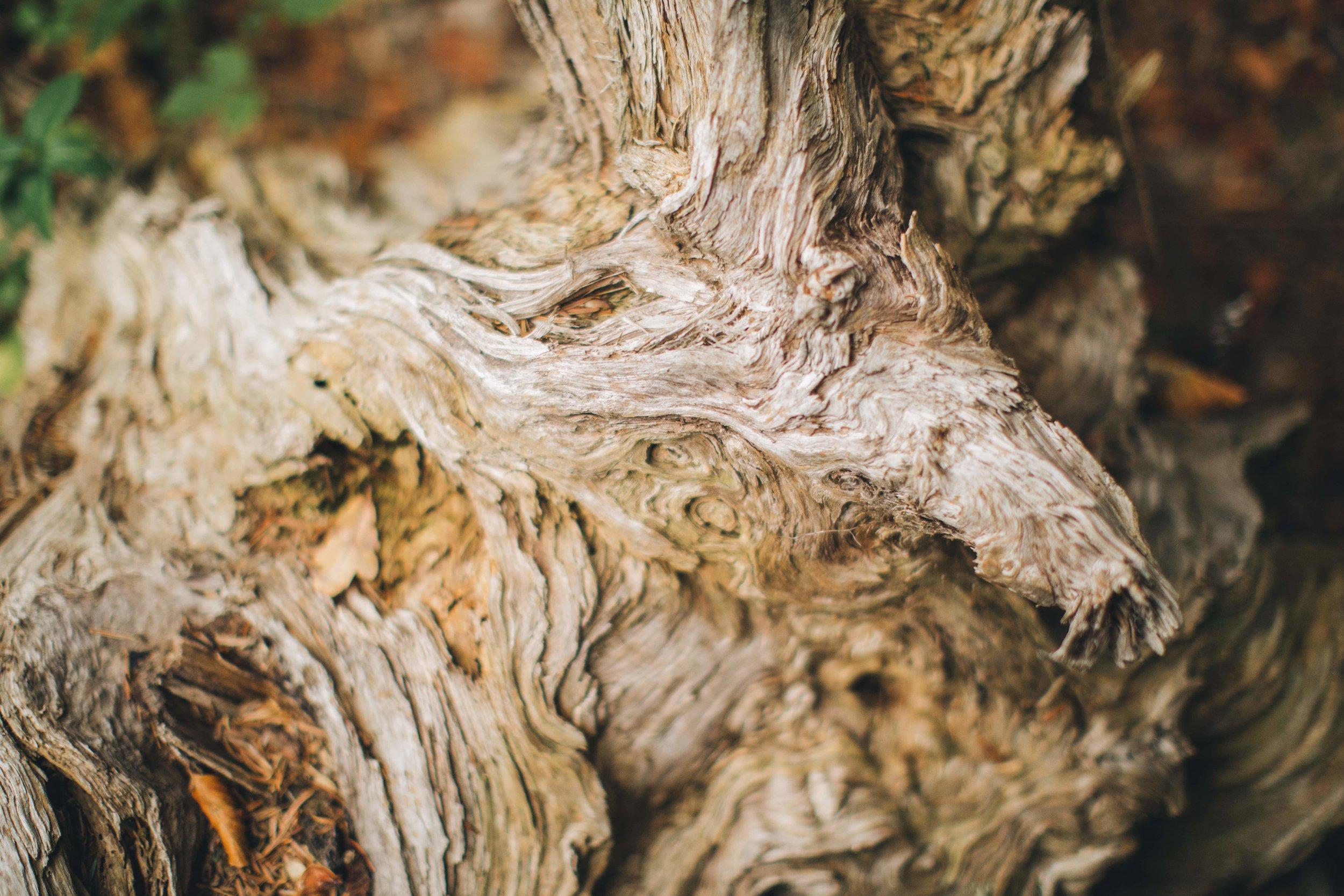 November_Schönheit_Baum-min.jpg