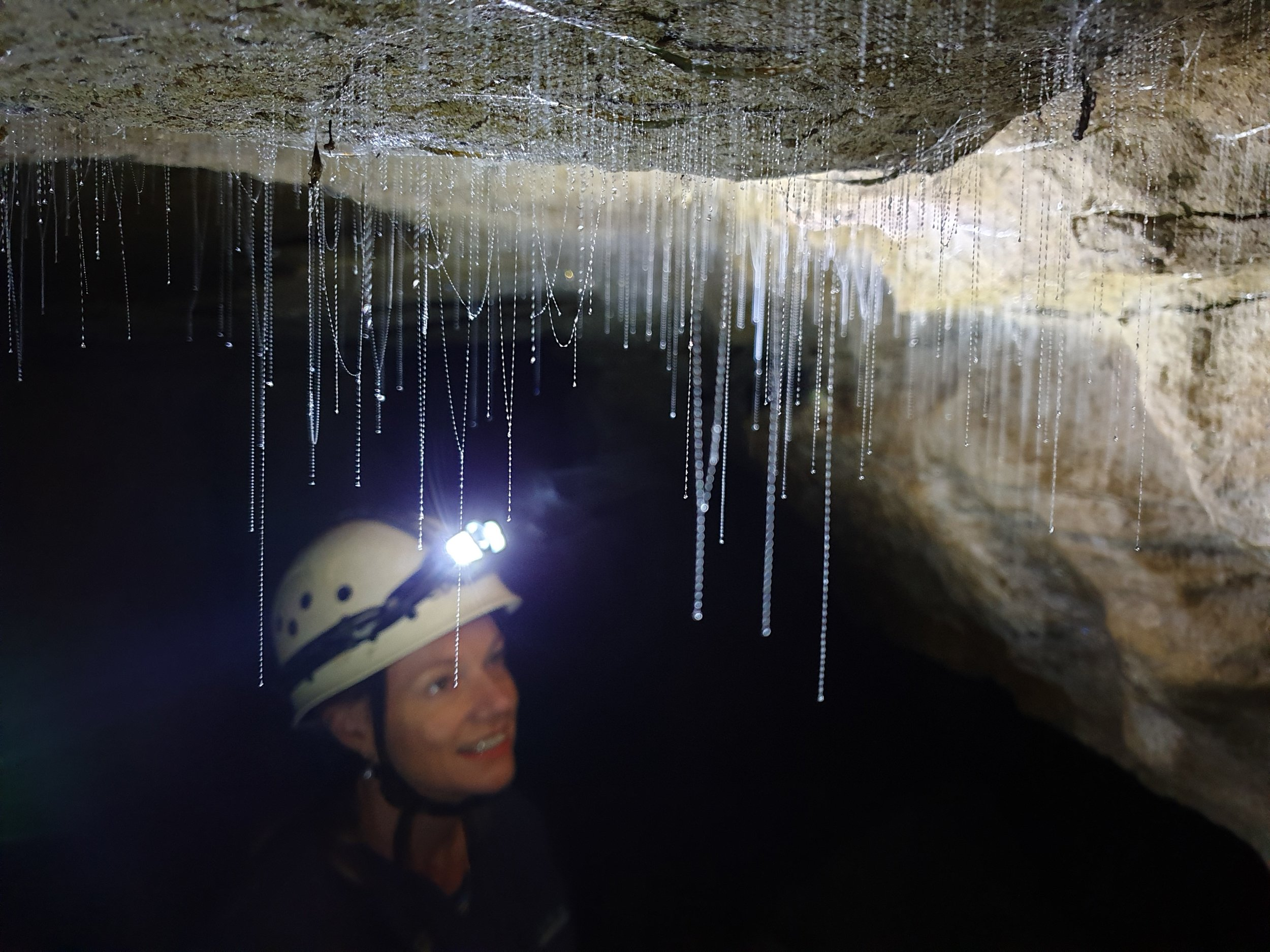 Private photography glow worm Waitomo caves.jpg